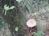 blidaru-1-6-septembrie-2013-interad-si-ordo-in-tabara-de-reconectarecu-strabunii-2