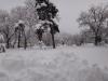 castelul-iulia-hasdeu-21-in-01-februarie-2014