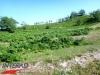 interad-excursie-prislop-sarmizegetusa-regia-fetele-albe-cetatuia-blidaru-transalpina-30