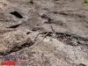 interad-excursie-prislop-sarmizegetusa-regia-fetele-albe-cetatuia-blidaru-transalpina-44
