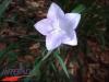 interad-excursie-prislop-sarmizegetusa-regia-fetele-albe-cetatuia-blidaru-transalpina-52