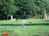 interad-excursie-prislop-sarmizegetusa-regia-fetele-albe-cetatuia-blidaru-transalpina-57