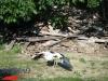 interad-excursie-prislop-sarmizegetusa-regia-fetele-albe-cetatuia-blidaru-transalpina-58
