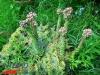 interad-excursie-prislop-sarmizegetusa-regia-fetele-albe-cetatuia-blidaru-transalpina-64