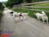 interad-excursie-prislop-sarmizegetusa-regia-fetele-albe-cetatuia-blidaru-transalpina-66