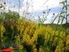 interad-excursie-prislop-sarmizegetusa-regia-fetele-albe-cetatuia-blidaru-transalpina-71