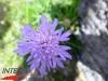 interad-excursie-prislop-sarmizegetusa-regia-fetele-albe-cetatuia-blidaru-transalpina-72