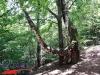 interad-excursie-prislop-sarmizegetusa-regia-fetele-albe-cetatuia-blidaru-transalpina-73