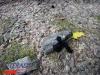 interad-excursie-prislop-sarmizegetusa-regia-fetele-albe-cetatuia-blidaru-transalpina-75_0