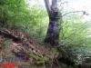 interad-excursie-prislop-sarmizegetusa-regia-fetele-albe-cetatuia-blidaru-transalpina-76