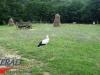 interad-excursie-prislop-sarmizegetusa-regia-fetele-albe-cetatuia-blidaru-transalpina-77