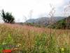 interad-excursie-prislop-sarmizegetusa-regia-fetele-albe-cetatuia-blidaru-transalpina-86