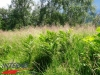 interad-excursie-prislop-sarmizegetusa-regia-fetele-albe-cetatuia-blidaru-transalpina-94