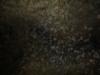 pestera-podul-lui-dumnezeu-13-tabara-initiatica-interad-travel-infinit-04-octombrie-2013