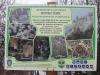 cetatea-tampa-34-in-08-februarie-2014