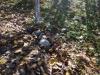 calatoria-in-lumina-09-noimebrie-2013-excursie-initiatica-la-dervent-si-pestera-sfantului-andrei-interad-travel-infinit-102