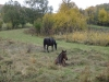 tara-luanei-nucu-12-13-octombrie-2013-interad-travel-infinit-tabara-initiatica