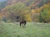 tara-luanei-nucu-5-13-octombrie-2013-interad-travel-infinit-tabara-initiatica