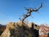 tara-luanei-varful-turtudui-14-12-octombrie-2013-interad-travel-infinit-tabara-initiatica