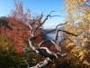 tara-luanei-varful-turtudui-18-12-octombrie-2013-interad-travel-infinit-tabara-initiatica
