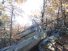 tara-luanei-varful-turtudui-44-12-octombrie-2013-interad-travel-infinit-tabara-initiatica