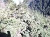 catre-grota-92-tabara-initiatica-15-17-noiembrie-2013-salina-slanic-grota-parintelui-arsenie-boca-templul-dorintelor-de-la-sinca-veche