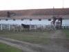 herghelia-17-tabara-initiatica-15-17-noiembrie-2013-salina-slanic-grota-parintelui-arsenie-boca-templul-dorintelor-de-la-sinca-veche
