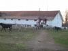herghelia-9-tabara-initiatica-15-17-noiembrie-2013