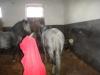 herghelia-de-lipiteni-25-tabara-initiatica-15-17-noiembrie-2013