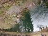 iazul-parintelui-arsenie-boca-19-tabara-initiatica-15-17-noiembrie-2013