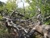 catre-varful-turtudui-4-tabara-tara-luanei-interad-15-18-august-2013