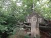 crucea-spatarului-tabara-tara-luanei-interad-15-18-august-2013