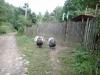 curcani-tara-luanei-1-tabara-tara-luanei-interad-15-18-august-2013