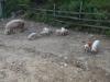 purcelusi-1-tabara-tara-luanei-interad-15-18-august-2013_0