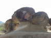 trovanti-babele-din-buzau-12-tabara-tara-luanei-interad-15-18-august-2013