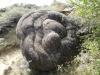 trovanti-babele-din-buzau-17-tabara-tara-luanei-interad-15-18-august-2013
