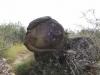 trovanti-babele-din-buzau-18-tabara-tara-luanei-interad-15-18-august-2013