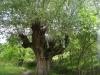 trovanti-babele-din-buzau-salcie-tabara-tara-luanei-interad-15-18-august-2013