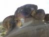 trovanti-babele-din-buzau-tabara-tara-luanei-interad-15-18-august-2013