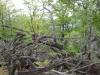 varful-turtudui-2-tabara-tara-luanei-interad-15-18-august-2013