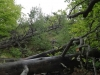 varful-turtudui-4-tabara-tara-luanei-interad-15-18-august-2013