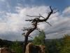 varful-turtudui-copacel-tabara-tara-luanei-interad-15-18-august-2013
