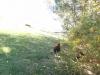 corbii-de-piatra-109-19-octombrie-2013-interad-travel-infinit