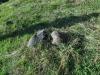 corbii-de-piatra-82-19-octombrie-2013-interad-travel-infinit