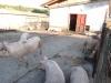 gospodaria-1-tabara-initiatica-la-grota-parintelui-arsenie-boca-in-perioada-02-04-august-2013-organizator-interad