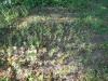 la-parintele-arsenie-boca-2-tabara-initiatica-la-grota-parintelui-arsenie-boca-in-perioada-02-04-august-2013-organizator-interad