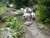 purcelusi-3-tabara-initiatica-la-grota-parintelui-arsenie-boca-in-perioada-02-04-august-2013-organizator-interad