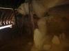 sinca-veche-30-tabara-initiatica-la-grota-parintelui-arsenie-boca-in-perioada-02-04-august-2013-organizator-interad