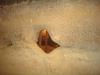 sinca-veche-36-tabara-initiatica-la-grota-parintelui-arsenie-boca-in-perioada-02-04-august-2013-organizator-interad