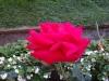 tabara-initiatica-la-grota-parintelui-arsenie-boca-in-perioada-02-04-august-2013-organizator-interad-trandafir-sambata-1